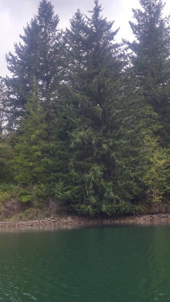 Yes, there is a bald eagle in this photo.