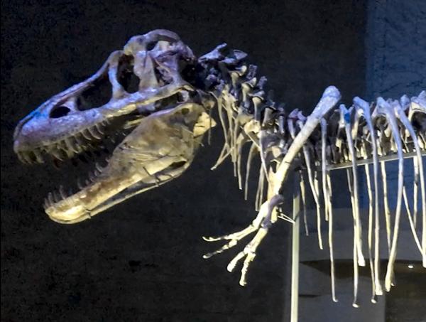 Tarbosaurus Baatar