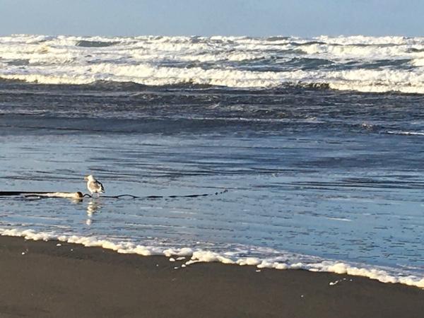 Seagulls at Long Beach