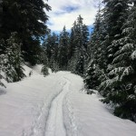 Snow, snow, and lots of snow! White Road trail.