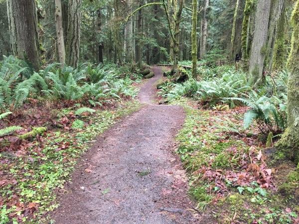 Woodard Bay Trail
