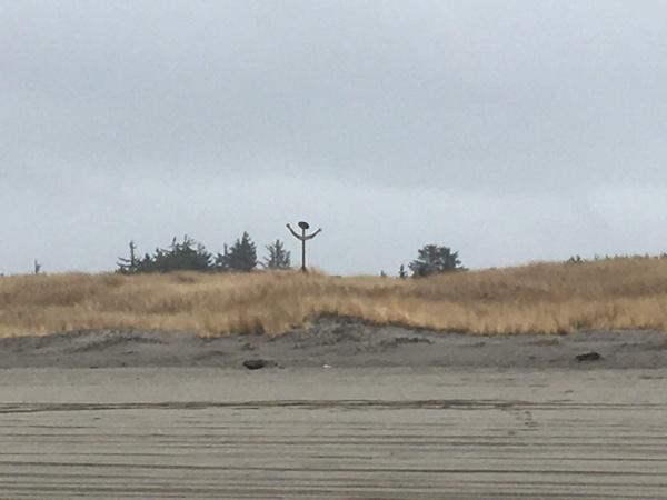 The dunes along the beach at Ocean Park