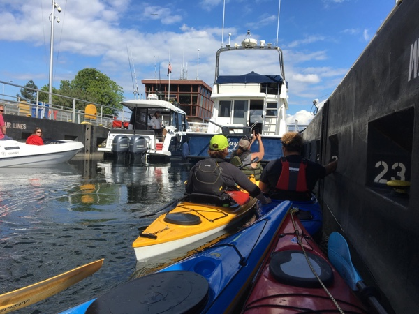 Rafting up for a trip through the Ballard Locks.