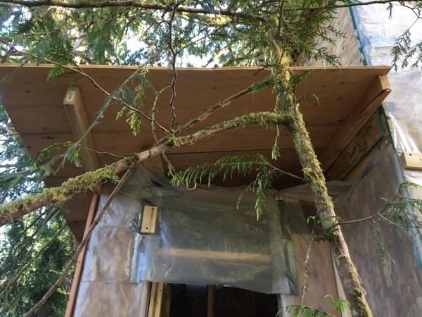 The new roof overhangs the back door