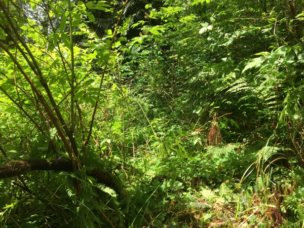 Dense vegetation on the other side of the creek