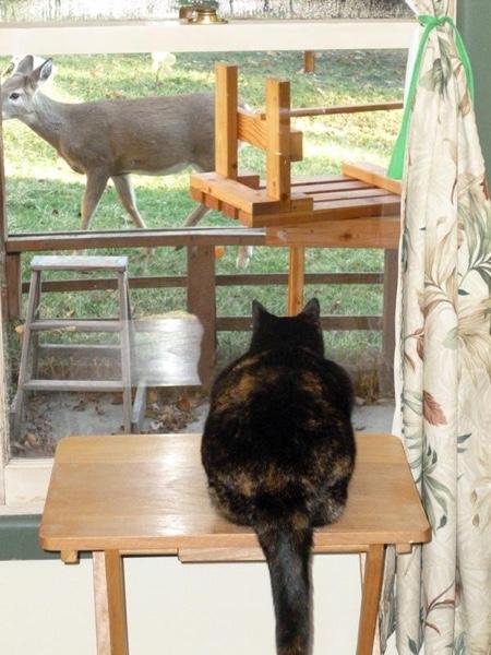 Pepper stalking deer.